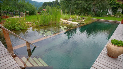 "Why having a ""Green"" swimming pool is a good thing!"